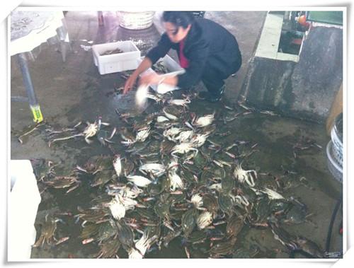 大鹿岛螃蟹