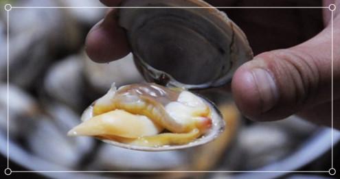 到丹东大鹿岛没吃到这些海鲜就亏了